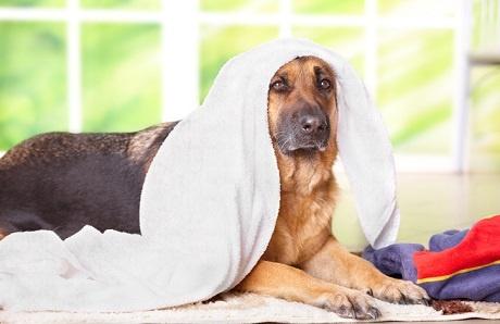 dog-towel-drying.jpg