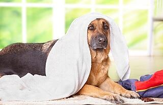 dog-towel-drying.jpg