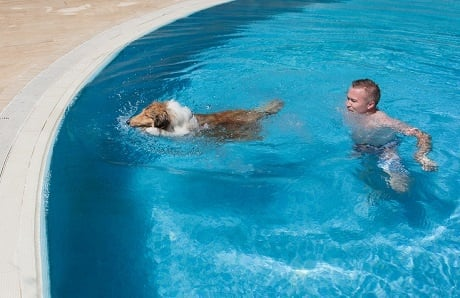 dog-with-man-in-swimming-pool.jpg
