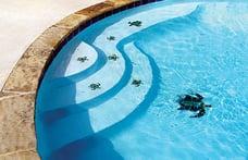 turtle-mosaics-on-pool-steps-and-floor