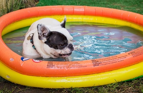 dog-in-inflatable-childrens-pool.jpg