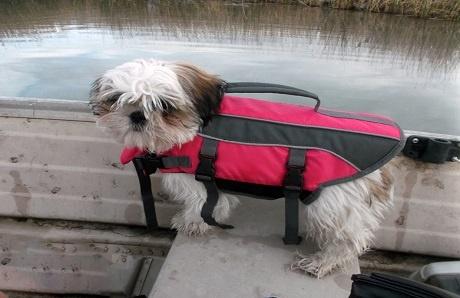 dog-in-life-jacket.jpg
