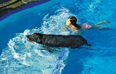 girl-and-dog-swimming-onto-tanning-ledge