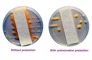 petri-dishes-bacteria-growth