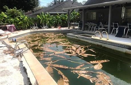 storm-damaged-gunite-swimming-pool.jpg