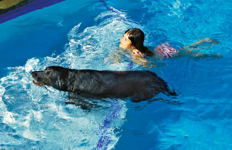 dog_and_girl_swimming_in_pool